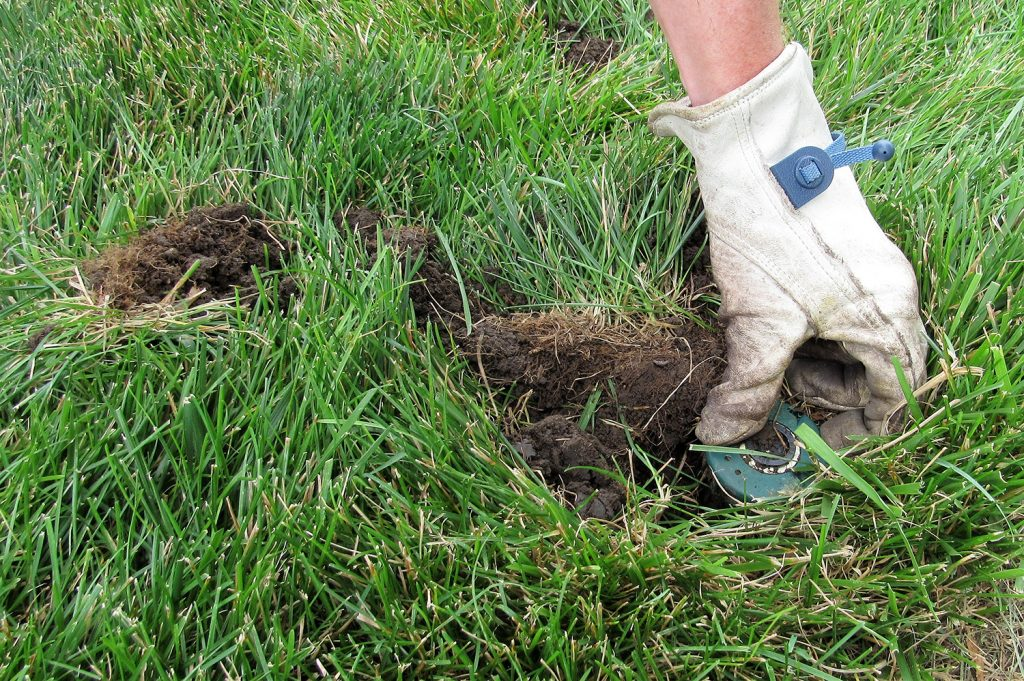 digging up a sprinkler head in a lawn